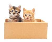 Två katter i en ask Royaltyfri Fotografi