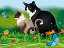 Två katter i trädgård Royaltyfri Foto