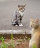 Två katter, når att ha slagits royaltyfria foton