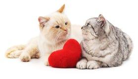 Två katter och röd hjärta Fotografering för Bildbyråer
