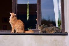 Två katter på fönstret Royaltyfri Fotografi