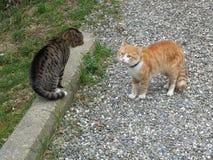 Två katter på grusvägen Fotografering för Bildbyråer