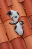 Två katter på taket Arkivfoton