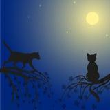 Två katter på träd Royaltyfria Bilder