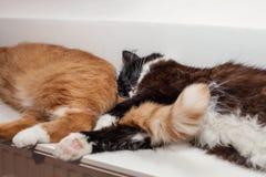 Två katter, rött och svartvitt, ligger fridfullt på ett varmt element som tillsammans kurar katten kramade kattens röda svans fotografering för bildbyråer
