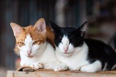 Två katter sitter tillsammans på det mattt arkivfoton