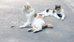 Två katter som låtsar för att vara små kryp på cementgolvet arkivfilmer