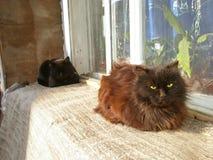 Två katter som ligger på ett fönster arkivbild