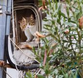 Två katter som ser ut ur ett övergivet husfönster Arkivfoto