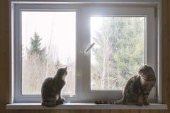 Två katter som sitter på en fönsterbräda och ett intresse, ser ut windoen Arkivbild