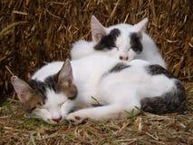 Två katter som sover på sugrörbalen Arkivbilder