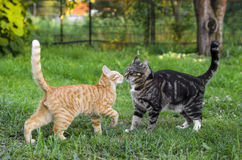 Två katter som spelar i trädgården Arkivfoton