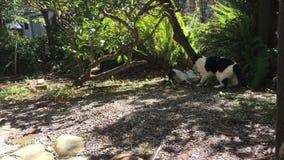 Två katter som spelar i trädgården 4K stock video