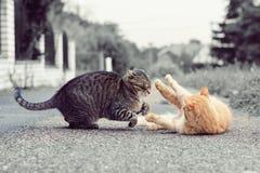Två katter som spelar leken Arkivfoto
