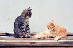 Två katter som spelar leken Arkivfoton