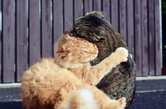 Två katter som spelar leken Royaltyfri Fotografi