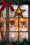 Två katter som ut ser ett fönster med julpynt Arkivfoto