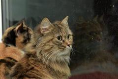 Två katter som ut ser fönstret Arkivfoto
