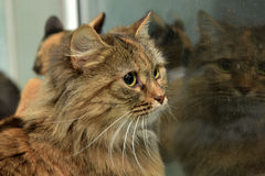 Två katter som ut ser fönstret Arkivbilder