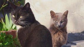 Två katter värma sig i solen