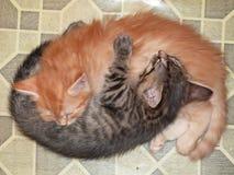 Två katter, yin och yang, kram och sömn arkivfoto