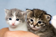 Två kattungar royaltyfria foton