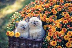 Två kattungar i en korg med blommor royaltyfri foto