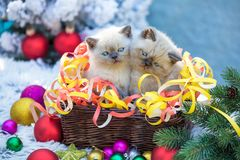 Två kattungar i en korg med julgarnering arkivfoton
