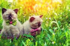 Två kattungar i en korg på en grön gräsmatta på soluppgång arkivbilder