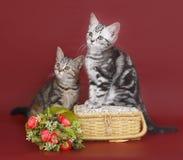 Två kattungar med en korg av blommor. Royaltyfria Bilder