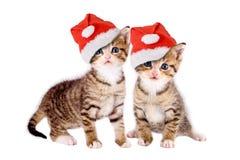 Två kattungar med isolerade julhattar Royaltyfri Foto