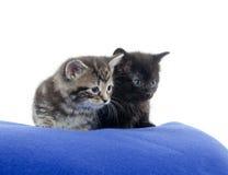 Två kattungar på den blåa filten Royaltyfria Foton