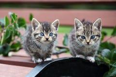 Två kattungar som poserar på en bänk Arkivbilder
