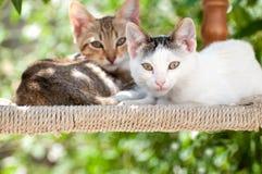 Två kattungar som sitter på en stol som ser kameran royaltyfria bilder