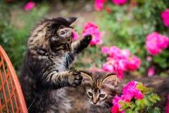 Två kattungar som spelar i trädgården Royaltyfri Foto