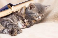 Två kattungar som täckas med en bok som därefter sover Vila efter schoo royaltyfria bilder