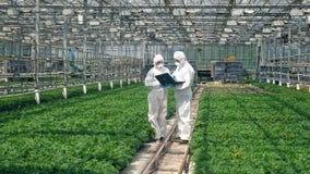 Två kemister talar i ett växthus med växter stock video