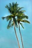 Två kokosnötpalmträd på den thailändska kusten Arkivbilder