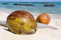 Två kokosnötter som lägger på den vita stranden Fotografering för Bildbyråer