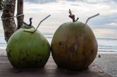 Två kokosnötter som tycker om en stranddag Royaltyfri Foto