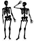 Två konturer av ett skelett av personen Royaltyfri Fotografi