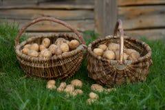 Två korgar av potatisar Royaltyfri Bild