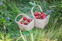 Två korgar mycket av jordgubbar Välj din egen lantgård Arkivbilder
