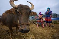 Två kullestamkvinnor framlägger en yak som är till salu på kullestammarknaden Arkivbild