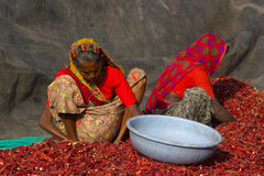 Två kvinnlig som arbetar i kylig lantgård Arkivbilder