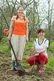 Två kvinnligträdgårdsmästarar som planterar treen Royaltyfri Foto