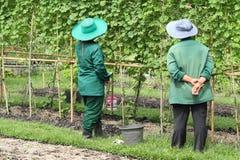 Två kvinnligträdgårdsmästarar som planterar treen Arkivfoto