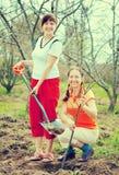 Två kvinnligträdgårdsmästarar som planterar treen Arkivbild