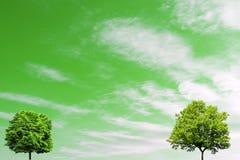 Två lövrika träd på en bakgrund av den gröna himlen royaltyfri bild