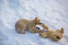Två lilla björnar Fotografering för Bildbyråer